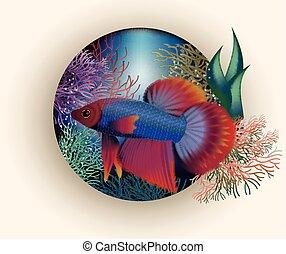 トロピカル, 水中, fish, カード