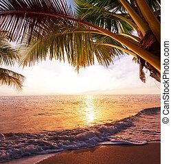 トロピカル, 浜