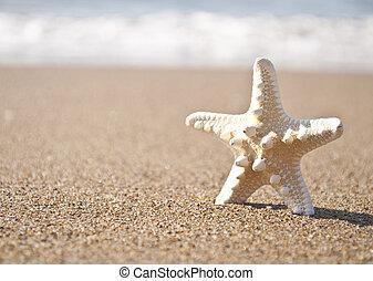 トロピカル, 砂ビーチ, 白, ヒトデ