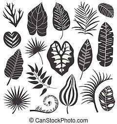 トロピカル, 葉, コレクション, セット