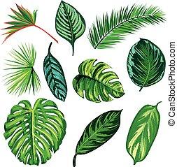 トロピカル, 葉, コレクション, 隔離しなさい, vector., セット