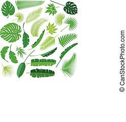 トロピカル, 葉, コレクション, 隔離しなさい, vector., 大きい, セット