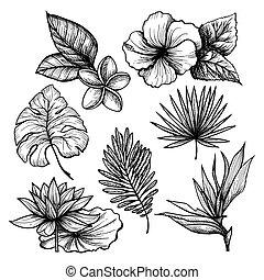 トロピカル, 葉, セット
