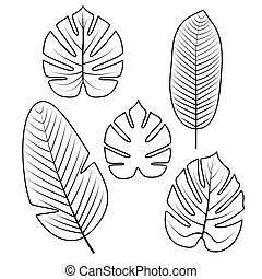 トロピカル, 葉, collection., ベクトル, illustration.