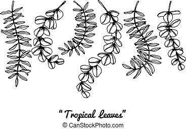 トロピカル, 葉, drawing.
