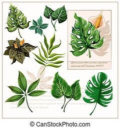 トロピカル, 葉, pictograms, 緑, セット
