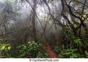 トロピカル, 霧, ジャングル