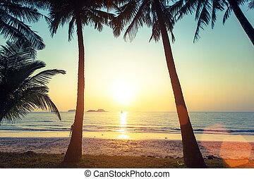 トロピカル, 驚かせること, 浜。, 日没