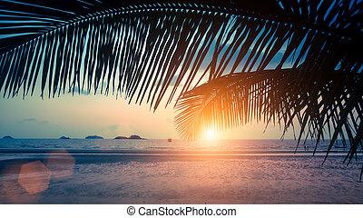 トロピカル, 驚かせること, 海, の間, 浜, sunset.