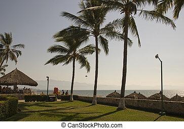 トロピカル, c, メキシコ人, 現場, 太平洋