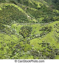 トロピカル, hills.