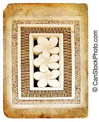 トロピカル, plumeria., 花, 古い, postcard.
