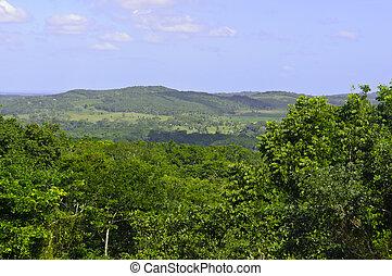 トロピカル, rainforest