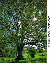 ドイツ, schleswig schleswig-holstein, 古い, オーク