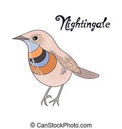 ナイチンゲール, ベクトル, 鳥, イラスト