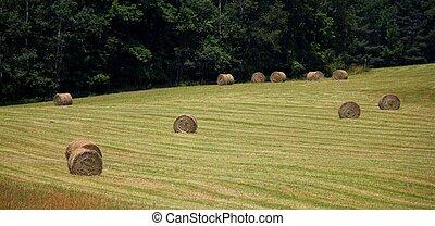 ニューイングランド, hayfield