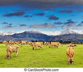 ニュージーランド, 風景