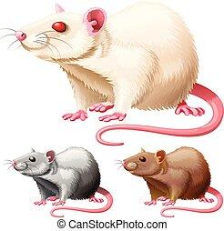 ネズミ, 白, イラスト, 実験室