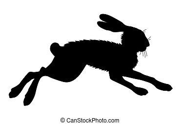 ノウサギ, シルエット, 白, 背景,