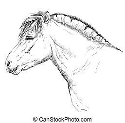ノルウェーのフィヨルドの子馬
