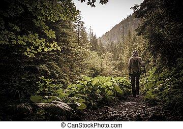 ハイカー, 山, 歩くこと, ハイキング, ポーランド人, 森林
