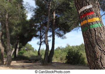 ハイキング, 木, 道