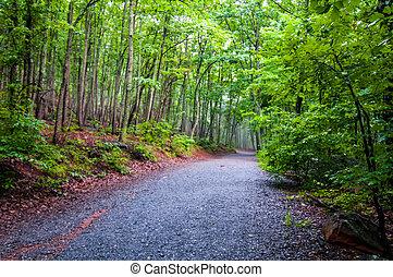 ハイキング, 森, によって, 森林パス, 厚く