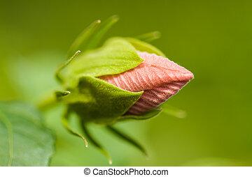 ハイビスカス, 花