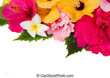 ハイビスカス, 花, ボーダー, カラフルである
