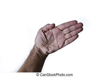 ハイライトした, ニュートラル, 白い背景, 手