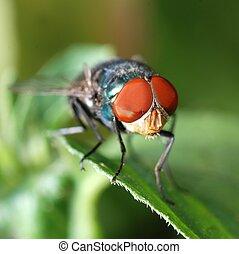 ハエ, マクロ, 昆虫