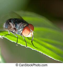 ハエ, 昆虫