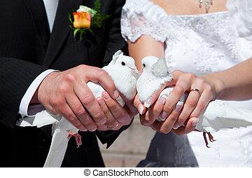 ハト, 結婚式