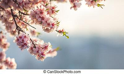 ハンガリー, 美しい, アーモンド, 日の出, ブダペスト, 花