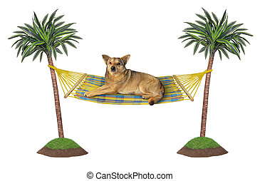 ハンモック, 犬, 休む