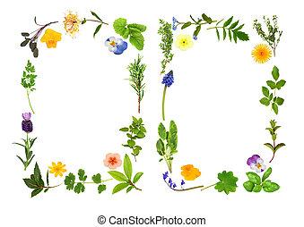 ハーブ, ボーダー, 花, 葉
