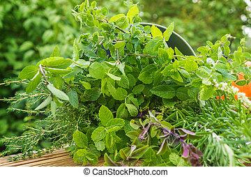 ハーブ, 庭, 薬効がある, 植物