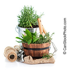 ハーブ, 緑, 道具, 庭, 新たに
