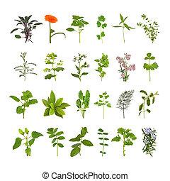 ハーブ, 花, 葉, コレクション