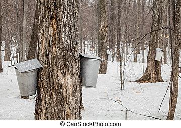 バケツ, 樹液, 森林, 木, かえで