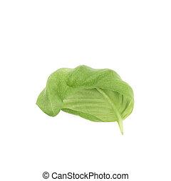 バジル, 新たに, 葉, 隔離された