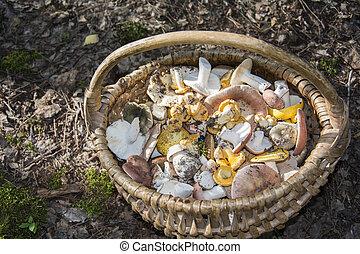 バスケット, 夏, 森, mushrooms.