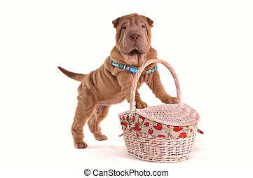 バスケット, 子犬, ピクニック