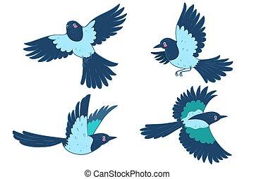 バックグラウンド。, ベクトル, かささぎ, 隔離された, 鳥, セット, 白, graphics.