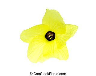 バックグラウンド。, 白い花, 黄色
