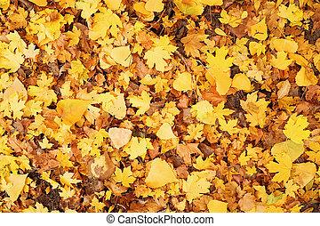 バックグラウンド。, 秋, textural, 季節的, カラフルである