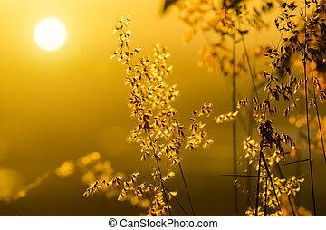 バックグラウンド。, 花, 草, ライト