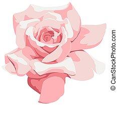 バラ, ピンク, 薄い