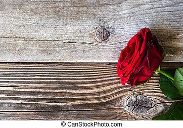 バラ, 上に, 木, 赤