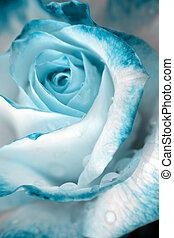バラ, 低下, の上, .birthday, card., 水, 青, 終わり